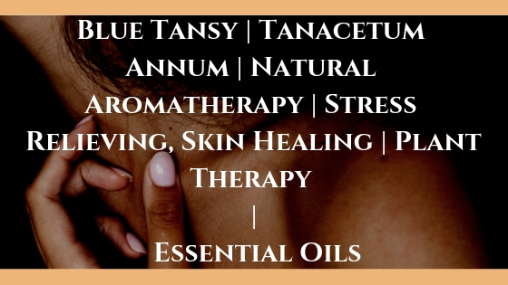 Blue Tansy | Tanacetum Annum | Natural Aromatherapy | Stress Relieving, Skin Healing | Plant Therapy | Essential Oils