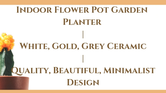 Indoor Flower Pot Garden Planter _ White, Gold, Grey Ceramic _ Quality, Beautiful, Minimalist Design Blog Post Banner Image