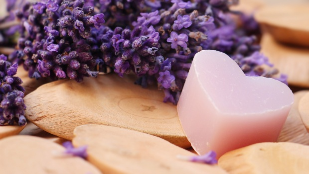 lavender-2443220