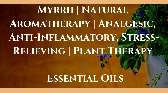 Myrrh _ Natural Aromatherapy _ Analgesic, Anti-Inflammatory, Stress-Relieving _ Plant Therapy _ Essential Oils Blog Post Banner Image