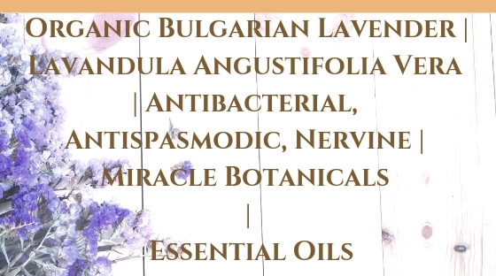 Organic Bulgarian Lavender _ Lavandula Angustifolia Vera _ Antibacterial, Antispasmodic, Nervine _ Miracle Botanicals _ Essential Oils Blog Post Banner Image