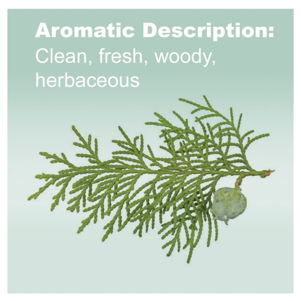 Cypress Essential Oil - Promotes Vitality and Energy, Helps Improve the Appearance of Oily Skin 5