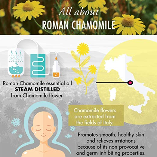 Roman Chamomile Essential Oil - 100% Pure Therapeutic Grade for Hair, Face, Skin, Eczema, Sleep, Bath Relaxation, Diffuser 2